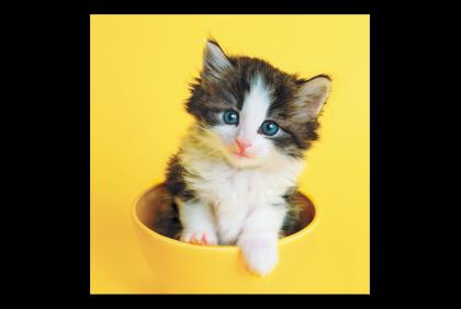 Brildoekjes -  microfiber doek  Keith kitty