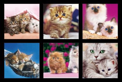 Brildoekjes -  microfiber doek  kitty  02